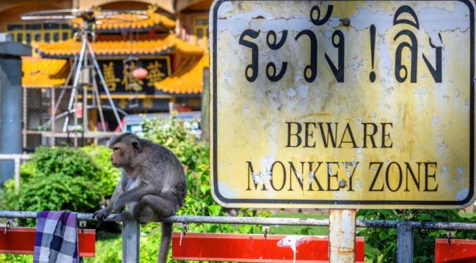 Маймуните на Тайланд побесняха – няма туристи